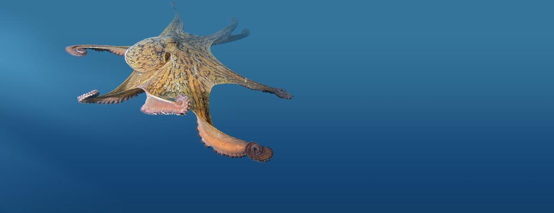slider-bg-poulpe-4